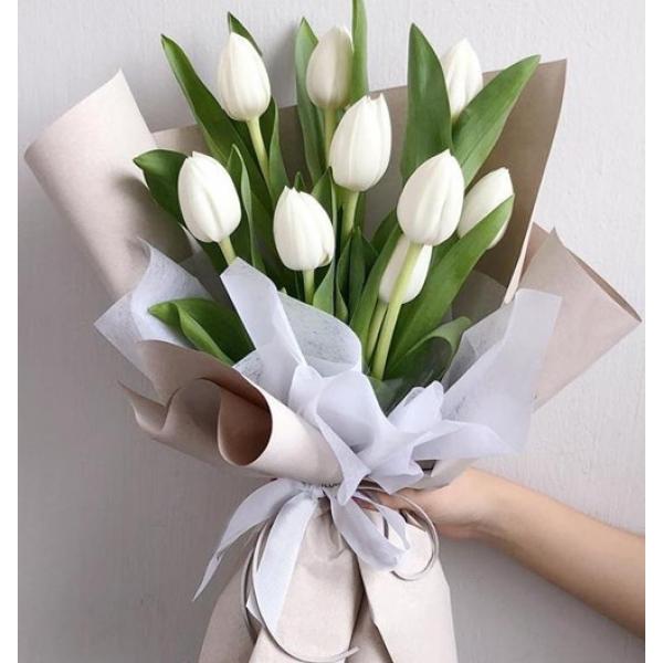 Special Tulip 520